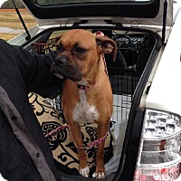 Adopt A Pet :: Nellie - Brentwood, TN