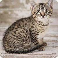 Adopt A Pet :: Meadow - Plymouth, MN
