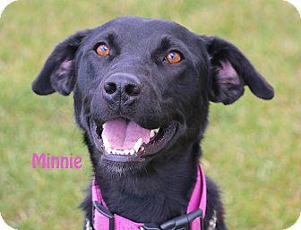 Labrador Retriever Mix Dog for adoption in Idaho Falls, Idaho - Minnie