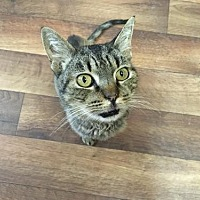 Adopt A Pet :: Lucy - Bakersfield, CA