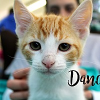 Adopt A Pet :: Dancer - Wichita Falls, TX