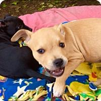 Adopt A Pet :: Opal**Video** - Pasadena, CA
