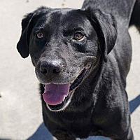 Adopt A Pet :: Kevin - Midlothian, VA