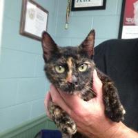 Adopt A Pet :: Geraldine - Clarkesville, GA
