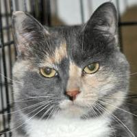 Adopt A Pet :: Star-Mom - Tilton, IL