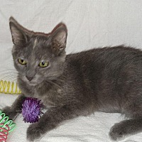 Adopt A Pet :: Abby - Scottsdale, AZ