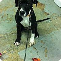 Adopt A Pet :: Toby - Peru, IN