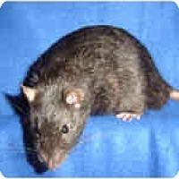 Adopt A Pet :: Nyx - Winner, SD