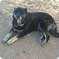 Adopt A Pet :: Cindy  (URGENT) - Lucerne Valley, CA