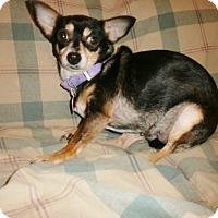 Adopt A Pet :: Posey - Silsbee, TX