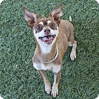 Adopt A Pet :: Penny - Acton, CA