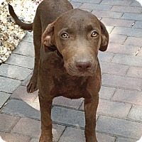 Adopt A Pet :: Jellie - Lewisville, IN