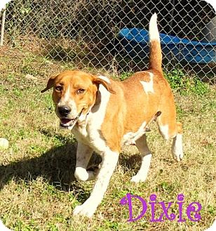 Hound (Unknown Type) Mix Dog for adoption in Georgetown, South Carolina - Dixie