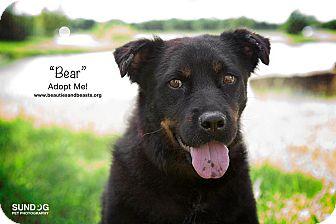 Australian Shepherd Mix Dog for adoption in Wichita, Kansas - Bear