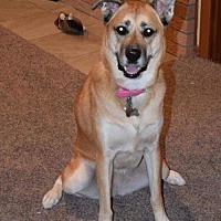 Adopt A Pet :: Penny - Lockport, NY