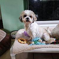 Adopt A Pet :: Quiche - Schofield, WI
