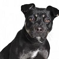 Adopt A Pet :: *PRINCESS - Burbank, CA
