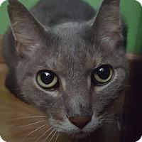 Adopt A Pet :: Armada - Hazel Park, MI