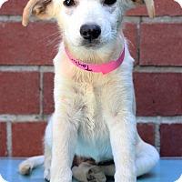Adopt A Pet :: Taylor - Waldorf, MD
