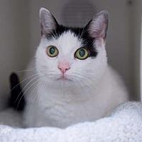 Adopt A Pet :: Aggie - Merrifield, VA