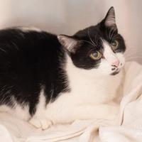 Adopt A Pet :: Kusama - Madison, GA