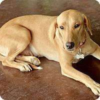 Adopt A Pet :: Tammy - San Antonio, TX