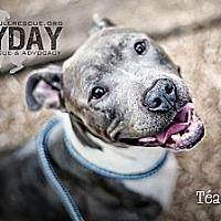 Adopt A Pet :: Téa - Phoenix, AZ