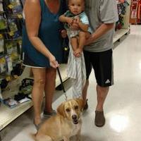 Adopt A Pet :: Iris - Fairfield, OH