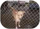 Hound (Unknown Type) Mix Dog for adoption in Cadiz, Ohio - Honeydew