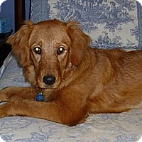 Adopt A Pet :: Twinkie Marie - Fort Hunter, NY