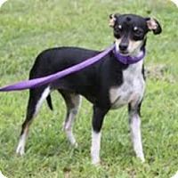 Adopt A Pet :: Louise - Staunton, VA