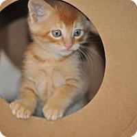 Adopt A Pet :: Jake - Modesto, CA