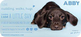 Dachshund Mix Dog for adoption in Houston, Texas - Abby