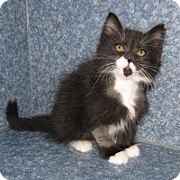 Adopt A Pet :: Dexter - Harrisburg, NC