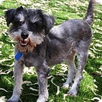 Adopt A Pet :: Newton - Gilbert, AZ