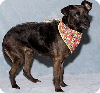Terrier (Unknown Type, Medium) Mix Dog for adoption in Mt. Prospect, Illinois - Linn