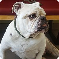 Adopt A Pet :: Corkie - Santa Ana, CA