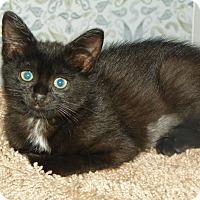 Adopt A Pet :: Ada - Whitehall, PA