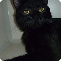 Adopt A Pet :: Newton - Hamburg, NY