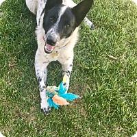Adopt A Pet :: Alyeska - Salt Lake City, UT