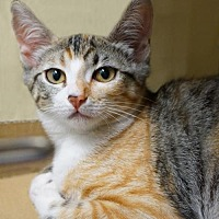 Adopt A Pet :: Gem - Alameda, CA