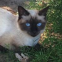Adopt A Pet :: Sealey - Parlier, CA