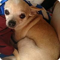 Adopt A Pet :: Bangles - San Diego, CA