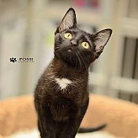 Adopt A Pet :: Pippa - Tampa, FL