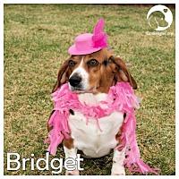 Adopt A Pet :: Bridget - Chicago, IL