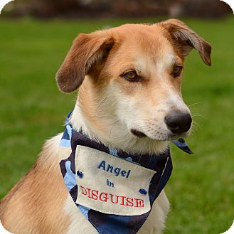 Collie Mix Puppy for adoption in Grand Rapids, Michigan - Laddy