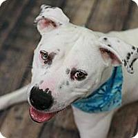 Adopt A Pet :: Piper - Nashville, TN