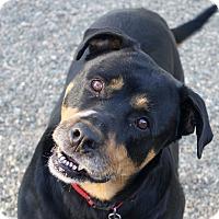 Adopt A Pet :: Lucy! - Sacramento, CA