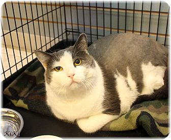 Domestic Shorthair Cat for adoption in Welland, Ontario - Kiki