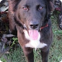 Adopt A Pet :: Max - in Maine - kennebunkport, ME